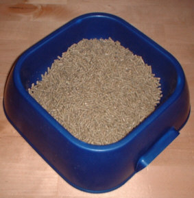 Layers' pellets in dog bowl