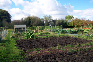 Not this allotment, but a typical British one